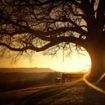 «Treehugger» de Pete Harrison